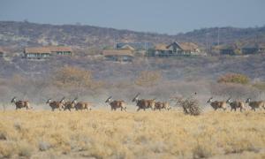 Safarihoek Lodge (2 of 33)