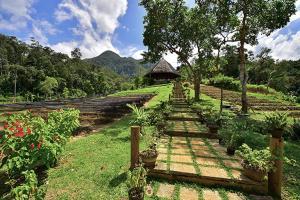 Sheridan Organic Farm and Eco Village - Tinitian