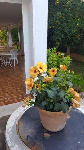 Amistad, Guest houses  Paguera - big - 24