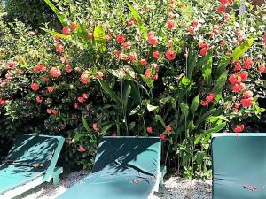 Tobago Hibiscus Golf Villas & Appartments, Apartmanhotelek  Mount Irvine - big - 30