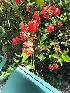 Tobago Hibiscus Golf Villas & Appartments, Apartmanhotelek  Mount Irvine - big - 31