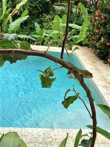 Tobago Hibiscus Golf Villas & Appartments, Apartmanhotelek  Mount Irvine - big - 40