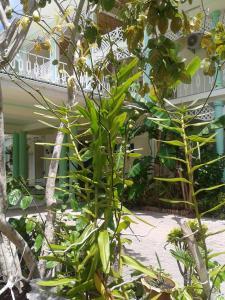 Palm Beach Hotel, Szállodák  Grand'Anse Praslin - big - 61
