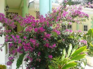 Palm Beach Hotel, Szállodák  Grand'Anse Praslin - big - 51