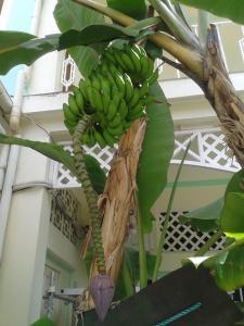 Palm Beach Hotel, Szállodák  Grand'Anse Praslin - big - 45
