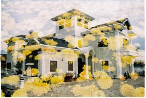 Di's House Of Nature Love - Trai Mat