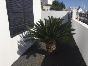 Casa Rubicon, San Bartolome - Lanzarote