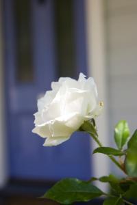 Lavender Cottage, Nyaralók  Greytown - big - 39