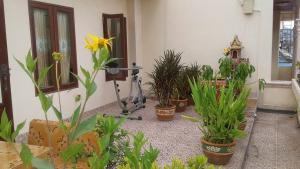 obrázek - Ammara Guesthouse