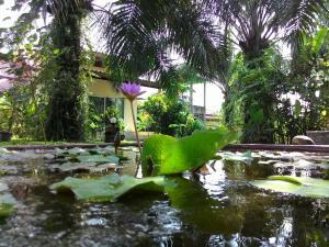 Aathid Garden Khao Lak - Kapong