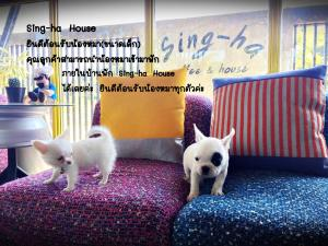 Sing-ha Coffee&House, Guest houses  San Kamphaeng - big - 26