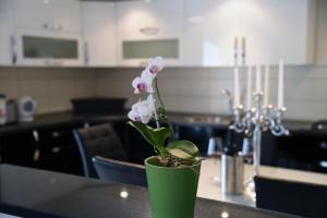 Apartment Mario, Appartamenti  Livno - big - 23