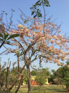 Kalae Resort, Üdülőtelepek  Ban Nong Ben - big - 54