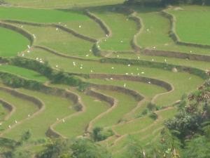 Manigala Holiday Resort - Weralugastenna