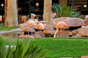 Flamingo Las Vegas (11 of 88)