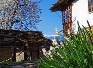 obrázek - Karashka
