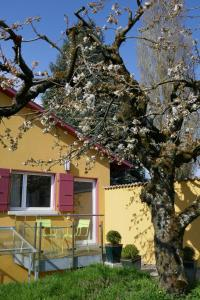 Swiss Borzoi House, Bed & Breakfast  Bellerive - big - 41