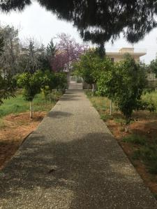 Pine Villa, Дома для отпуска  Selínia - big - 6