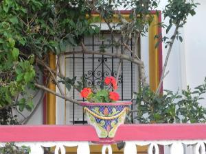 Hostal Playa Hidalgo, Guest houses  Rota - big - 20
