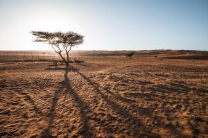 Sama al Wasil Desert Camp, Kempingy  Shāhiq - big - 21