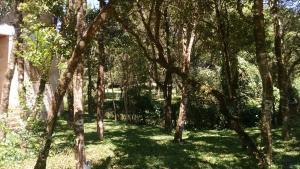 obrázek - Frio em Monte Verde
