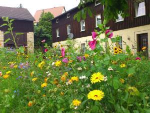 Apartment Sächsische Schweiz 3 - Struppen-Siedlung