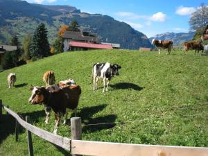 Alpenhof, Szállodák  Grindelwald - big - 56