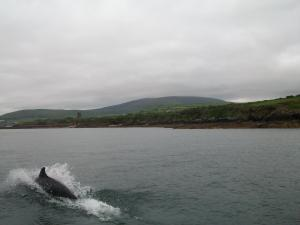 Fiuise B&B, Bed and Breakfasts  Dingle - big - 83