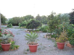 Pensión Las Tres Golondrinas, Vendégházak  Es Figueral Beach - big - 29