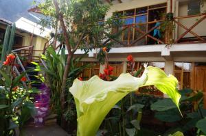 Hostel Andenes, Hostelek  Ollantaytambo - big - 92