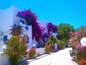 Hostels e Albergues - Pelagos Studios