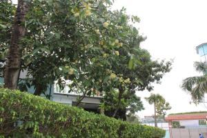 Green View Resort & Convention Center, Üdülőtelepek  Dakka - big - 27