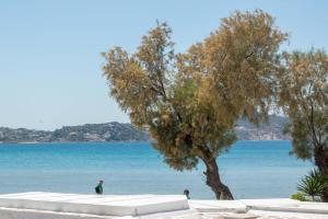 Thomais Studios, Appartamenti  Naxos Chora - big - 120