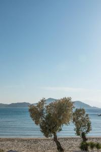 Thomais Studios, Appartamenti  Naxos Chora - big - 127
