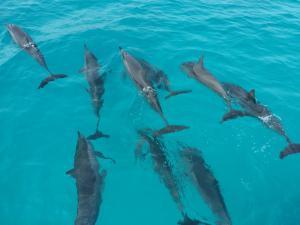 Luxury Beach Maldives, Penziony  Guraidhoo - big - 23