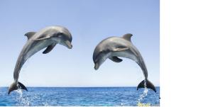 Delfin Guest House