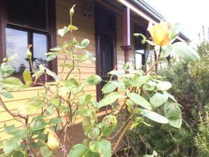 Albion Cottage - Queenscliff