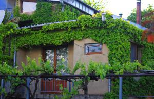 Гостевой дом Зеленая Веранда, Мцхета