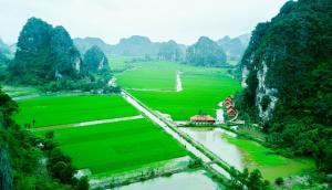 Lotus Field Homestay