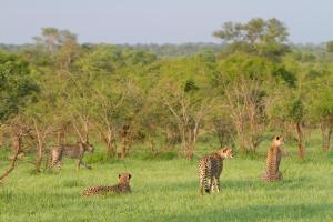 Ndzhaka Tented Camp, Люкс-шатры  Manyeleti Game Reserve - big - 15
