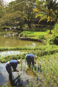 Four Seasons Resort Chiang Mai (29 of 49)