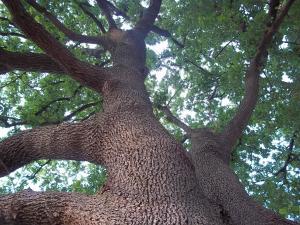 La quercia - AbcAlberghi.com