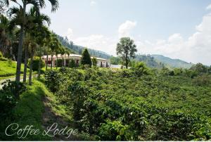 Hacienda Venecia Coffee Farm H..