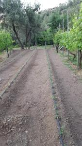 Gli Ulivi Agriturismo, Bauernhöfe  Sant'Agnello - big - 94
