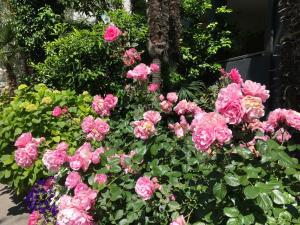 Villa Franca, Hotels  Nago-Torbole - big - 149