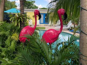 Calypso Inn Wilton Gay Male Resort, Ft Lauderdale