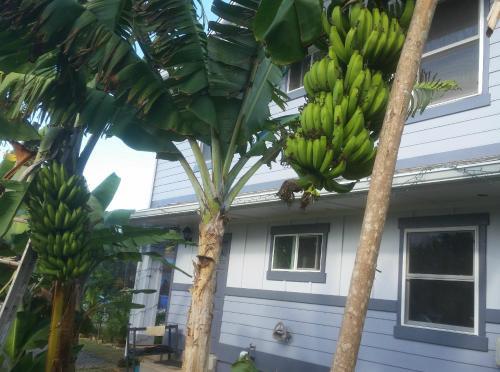 Banana Bungalow In Laie North Shore Oahu - Laie, HI 96762