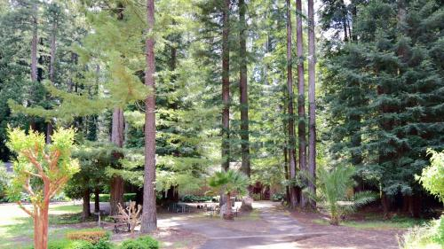 Northwood Lodge & Resort