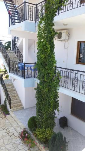 Фото отеля HOTEL Apartament Festim Caca