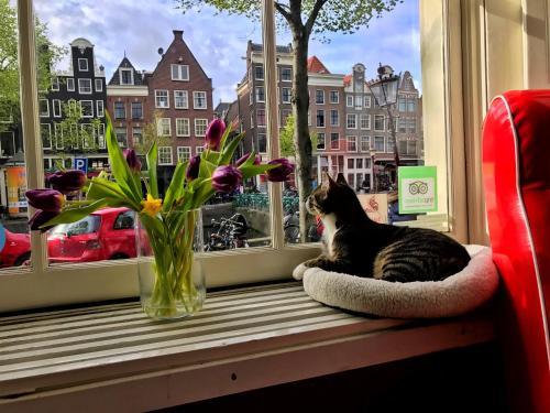 Tulip of Amsterdam B&B photo 25